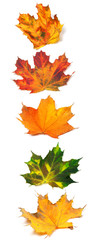 Letter I composed of autumn maple leafs