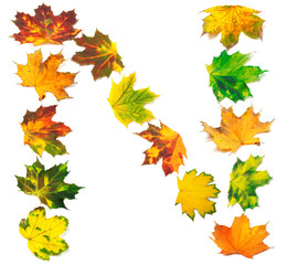 Letter N composed of autumn maple leafs