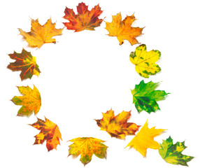 Letter Q composed of autumn maple leafs