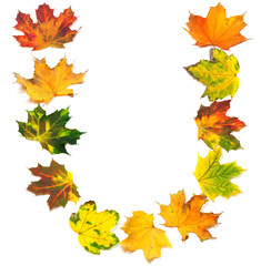 Letter U composed of autumn maple leafs