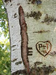 Herz in Baumstamm geritzt