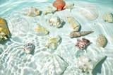Fototapety Seashells under water.