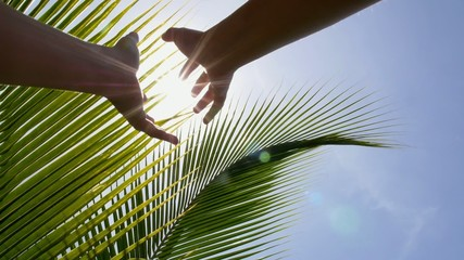 Hands Holding the Sun against Sky and Palm Leaves. Slow Motion.