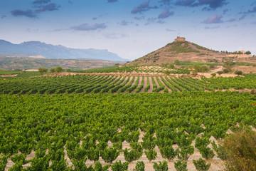 Viñedo junto al castillo de Davalillo, La Rioja (España)