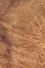 Poplar Wood Cross Section Grunge Texture