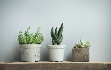 succulents in diy concrete pots in scandinavian home decor