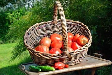 cesto di Pomodori bio in esterno