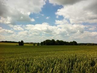 Blühende Landschaften unter weiß-blauem Himmel