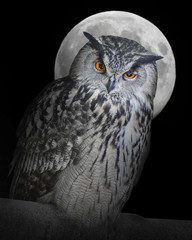 The Eagle owl (Bubo Bubo) and moon.