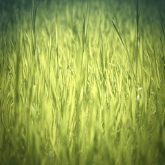 abstract nature background with grass, gradient green colors and
