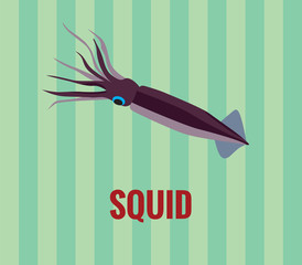 Squid - drawing on green background.