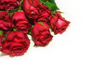 Red roses on white background.,