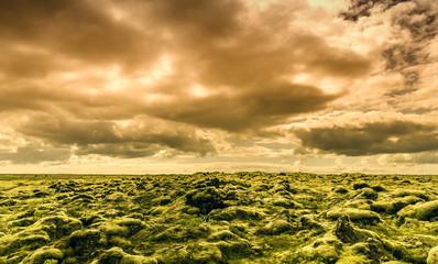 Sky and Moss
