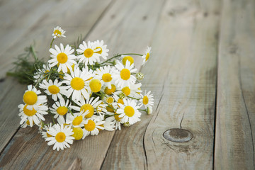 summer bouquet of chamomile on the old grey wooden background