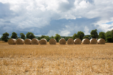Bales of hay in the farm field in a row