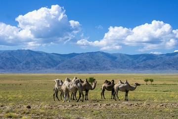 Landscape with camels