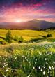 Obrazy na płótnie, fototapety, zdjęcia, fotoobrazy drukowane : Dramatic summer sunrise in the  mountains
