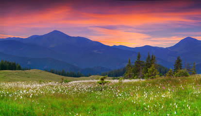 Beautiful summer landscape in the  mountains.