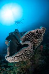 Salvador dali sponge is native to Gorontalo, Indonesia