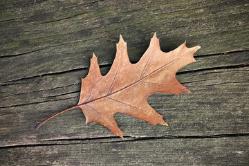 Autumn leave on wooden table.