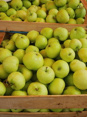 apple box market