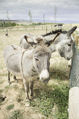 Donkeys on large farm