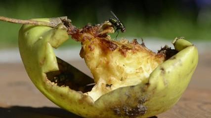 Obst mit Fliege