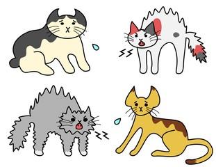 怒る猫たち、怯える猫たち