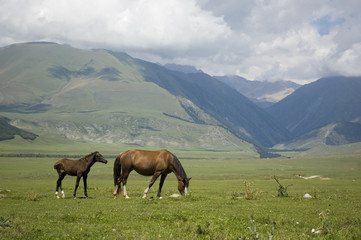 horses,mountains,pastures