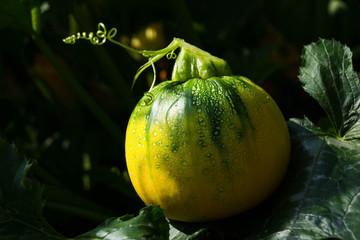 Kinky Zucchini