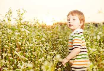 little boy at buckwheat plants