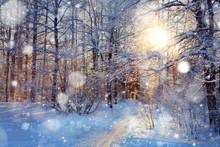 """Постер, картина, фотообои """"Snow in the woods"""""""
