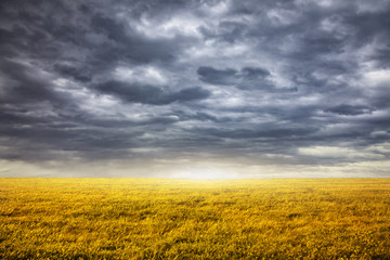 Field and overcast sky background