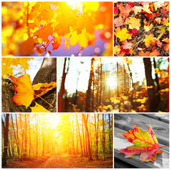Autumn collage - Herbstcollage