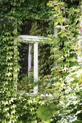 Wilder Wein am Fenster im Innenhof