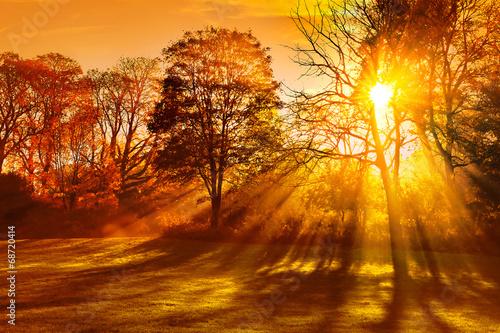 Zdjęcia na płótnie, fototapety na wymiar, obrazy na ścianę : Sunset in autumn park.