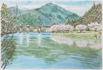 阿武川の桜