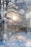 Snow in the woods