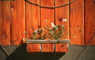 White daisies in a brown pot on a wooden background