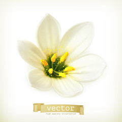 White flower, vector illustration