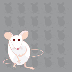 souris blanche fond gris souris mains ventre