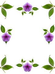 floral frame on white background