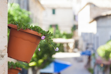 Typical flowery street in Valldemossa village, Mallorca island,