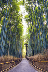 Bamboo Forest of Kyoto, Japan © SeanPavonePhoto