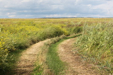 A ground road in a field with high grass in Krasnoyarsk area