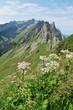 Bergwandern im Alpstein