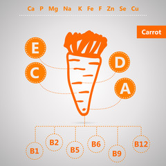 Vegetarian food. Vector infographic for carrot.