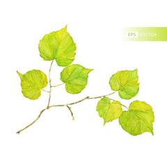 Vector watercolor leaf. Autumn theme.