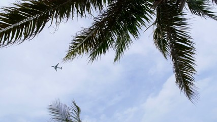 Plane Flying over Palm Trees.