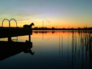 Sunset and dachshund